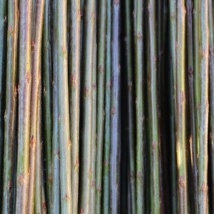 Bleu / Blues  Salix Purpurea Daphnoides    Bleu pilen stammer fra Frankrike. Den er en meget flott og smidig flettepil. Metallgrønn til blågrønn i fargen. Sjelden angrepet av sykdommer. Velegnet flettepil. Kan også brukes til belgisk gjerde.   Bleu kan kjøpes som:   - Stikling - Levende pil - Flettepil