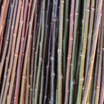 Black Maul   Salix Triandra gruppen   Lys til mørk brun. Den mest utbrette flettepilen i England. En stor pil som er bløt og smidig å flette med. Velegnet som kontrastfarge i kurver og fletting av gjerder og levegger og trær i hage.   Black Maul kan kjøpes som:   - Stikling - Levende pil - Flettepil