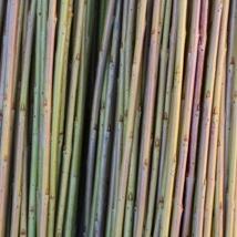 Leicestersure Dix    Salix purpurea gruppen    Lysegrønn med innslag av rosa i frisk bark. En av de flotteste pil som finnes. Er lang og slank, utrolig god å arbeide med. Velegnet som flettepil.   Leichestersure Dix kan kjøpes som:   - Stikling - Flettepil
