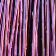 DugPil   Salix Dapnoides   God flettepil som er en utrolig flott kontrast farge i fletteverket, blir nesten helt sort hvis den tørkes mørkt. Velegnet som flettepil og levende pileflett. Flotte pollenbærere, velegnet i bigårder.   Dugpil kan kjøpes som:   - Stikling - Levende pil - Flettepil