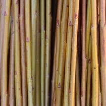 Alba   Salix Alba Vittelina Britenzis   En god og myk pil, fin nybegynner flettepil med, vakker gul-orange farge. Egner seg som flettepil og levende pil.   Alba kan kjøpes som:   - Stikling - Levende pil