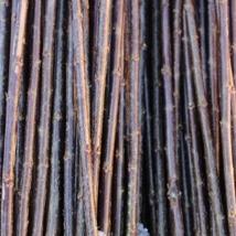 Noir de Villaine   Salix Triandra gruppen   En god flettepil, egner seg best til levende pileflett.   Noir kan kjøpes som:   - Stikling - Levende pil