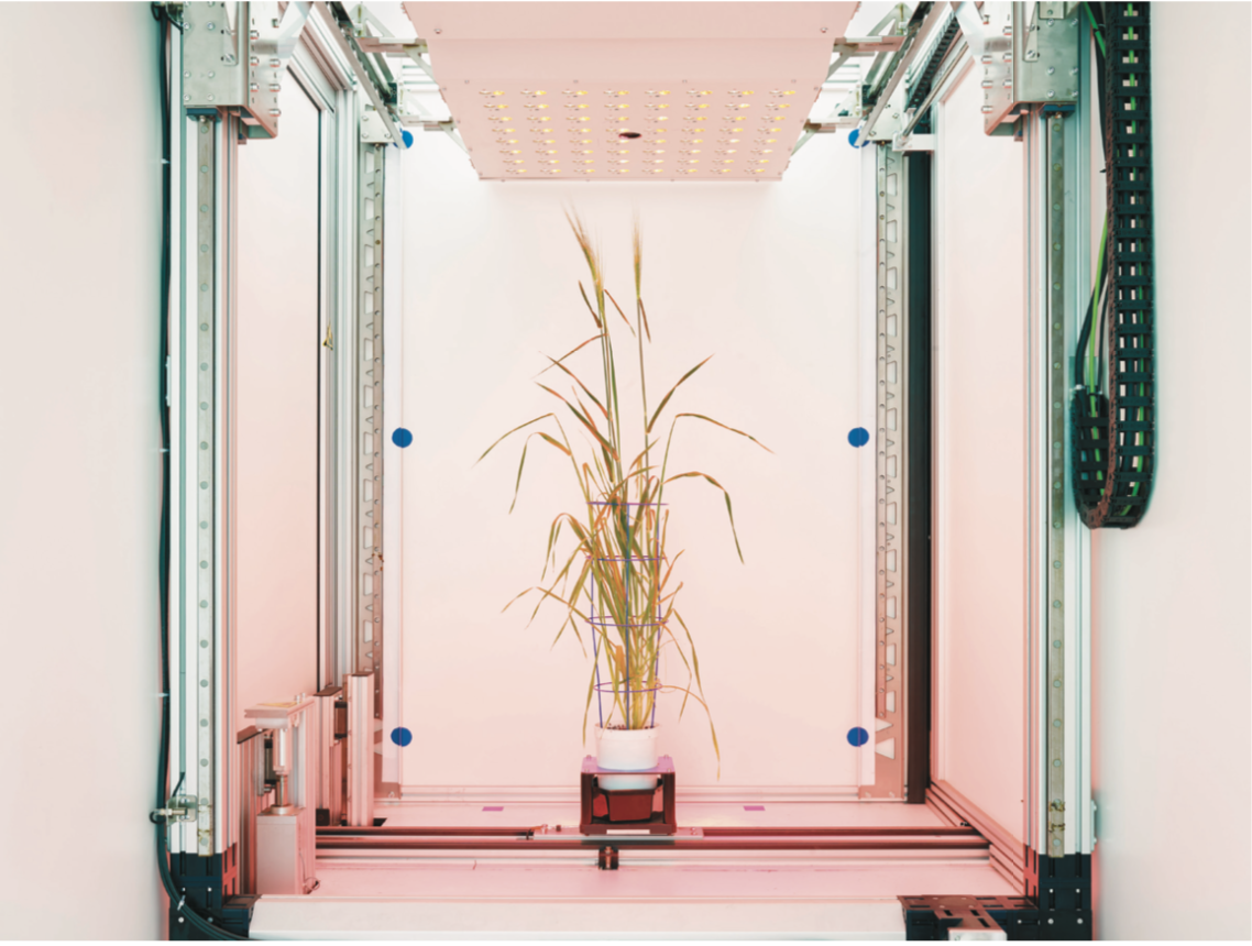 - The fully automated phenotyping facility of the Leibniz Institute for Plant Genetics and Crop Plant Research identifies which varieties of barley produce the highest yield. The aim is to find high-yielding and dry-resistant varieties that can be used for new breeding.Leibniz Institute for Plant Genetics and Crop Plant Research, Gatersleben, Germany
