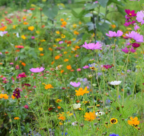 Northeast Meadow Mix from American Meadows