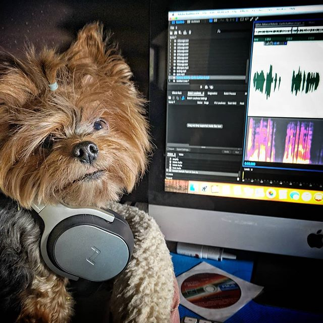 Meet my lovely production assistant #sarasotaphotographer #voiceover #audiobooks