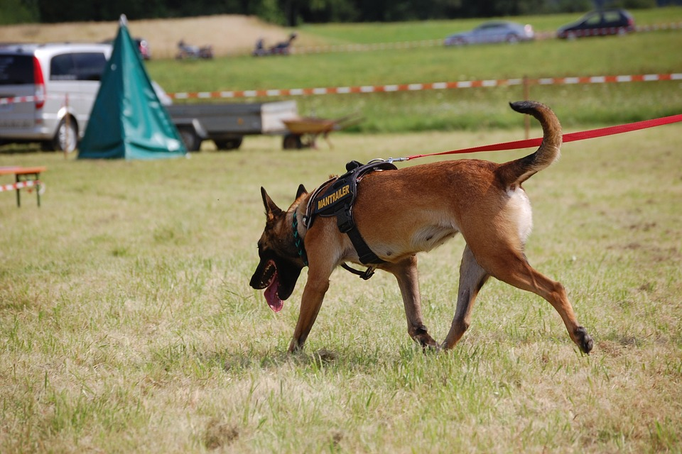 search-dog-620175_960_720.jpg
