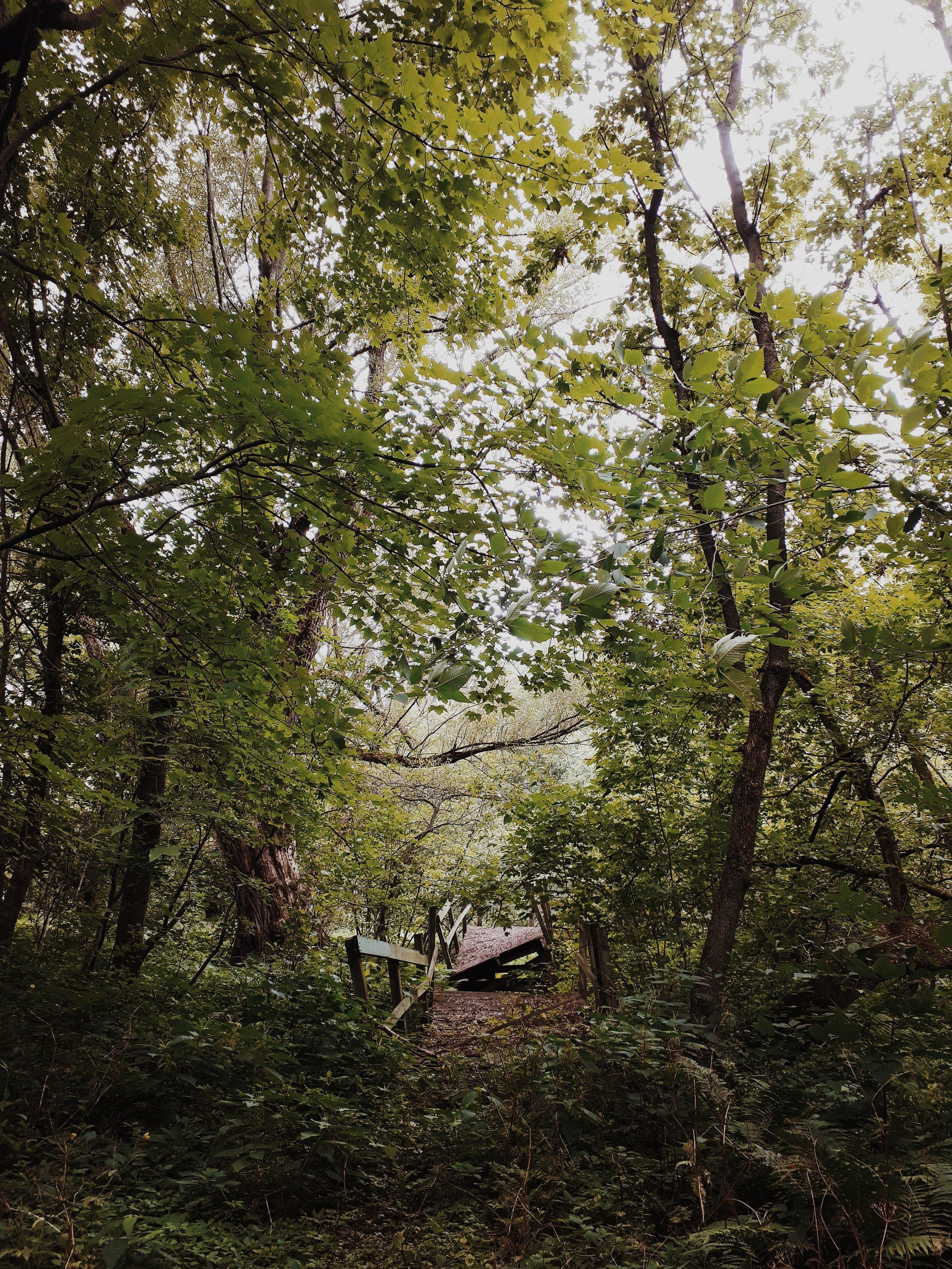 centre de la nature de farnham.jpg