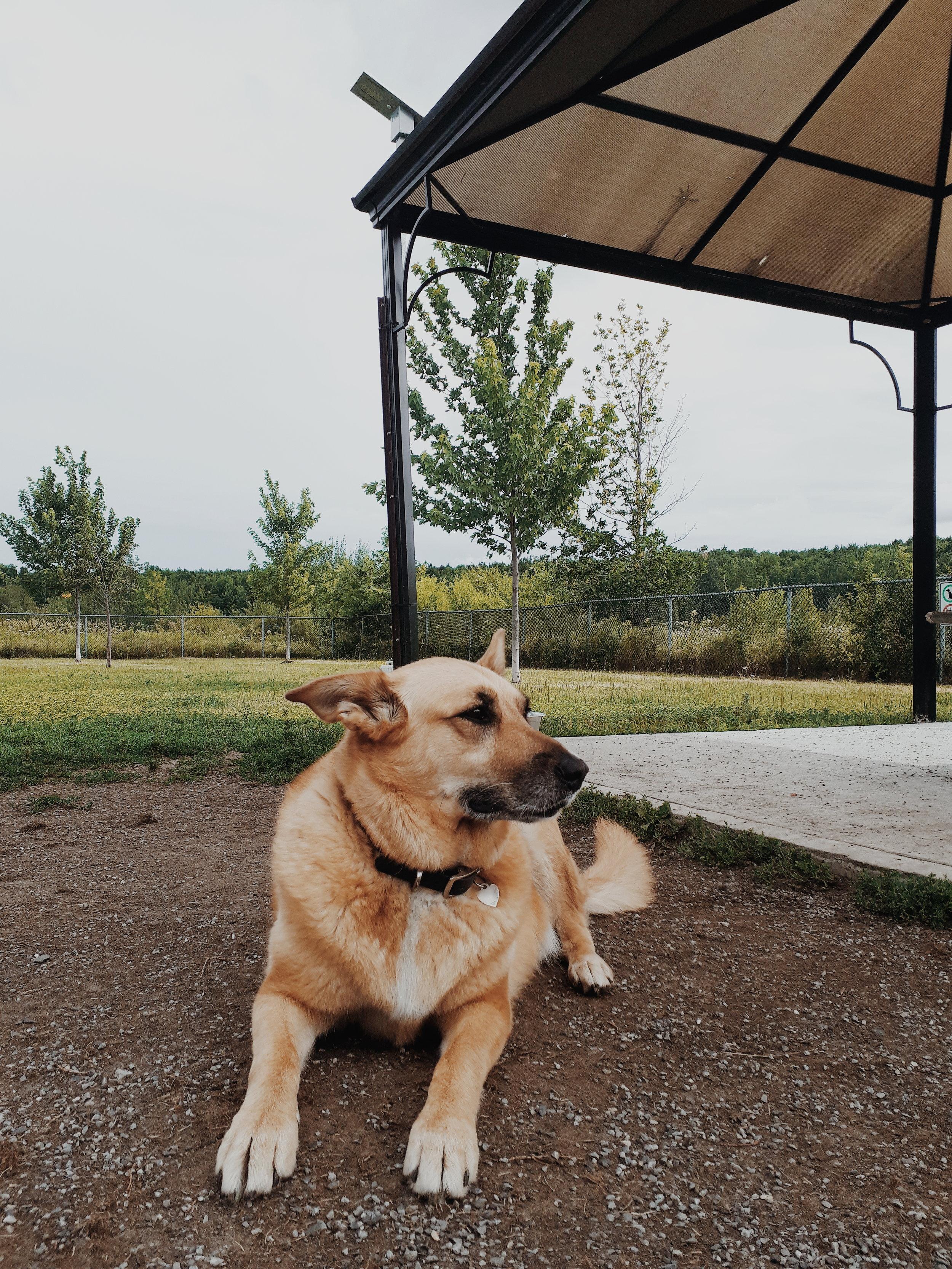parc a chien ste-julie (1).jpg