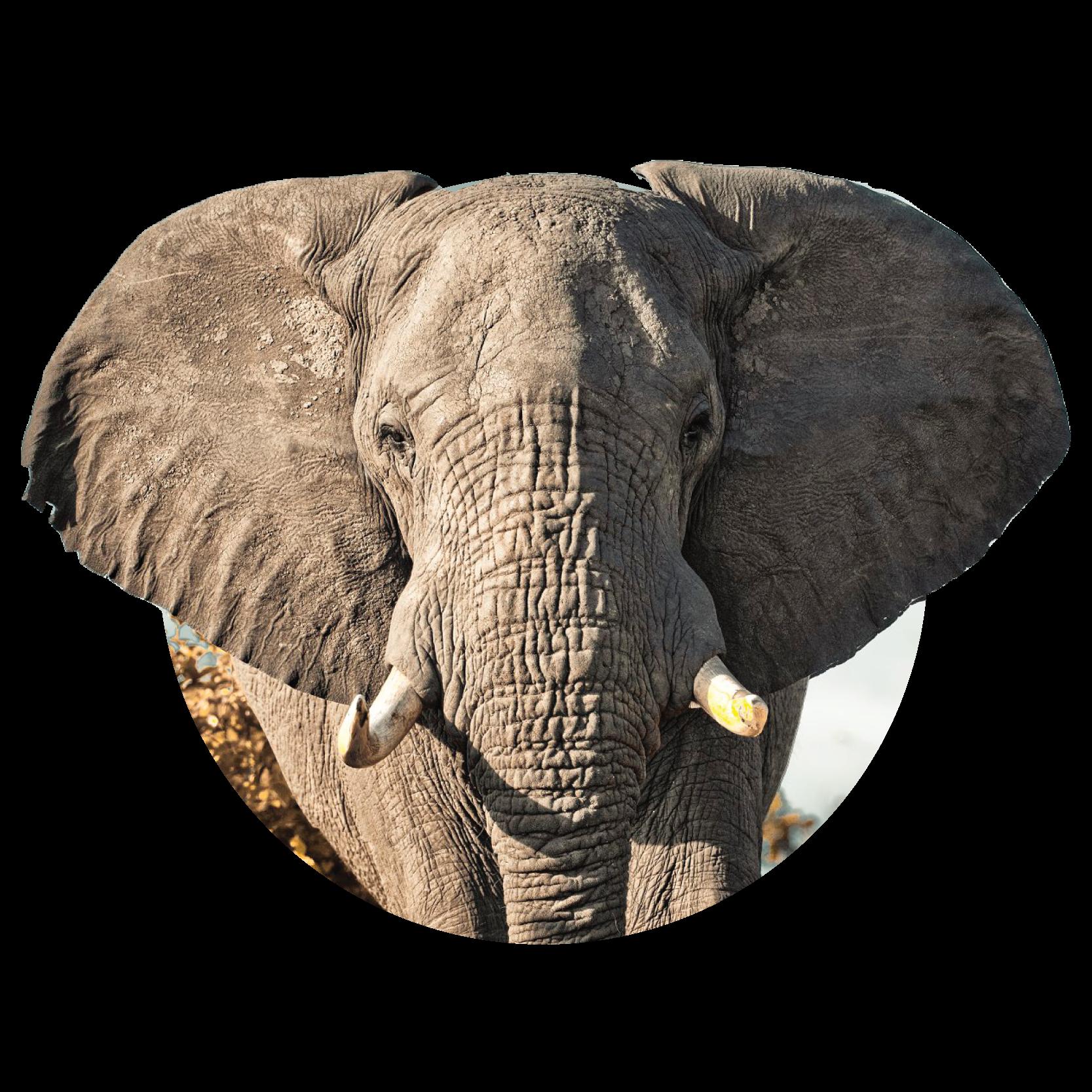 MA_Elephant_Def-01.png
