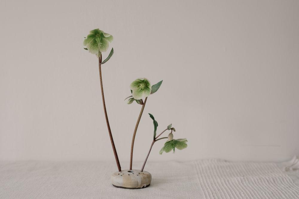 notaryceramics_flowerfrog.jpg