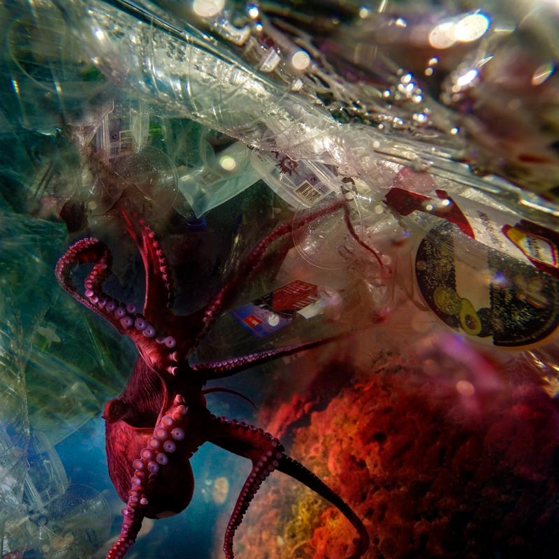 (from) Human Waste I ©Beatriz Glez Sa