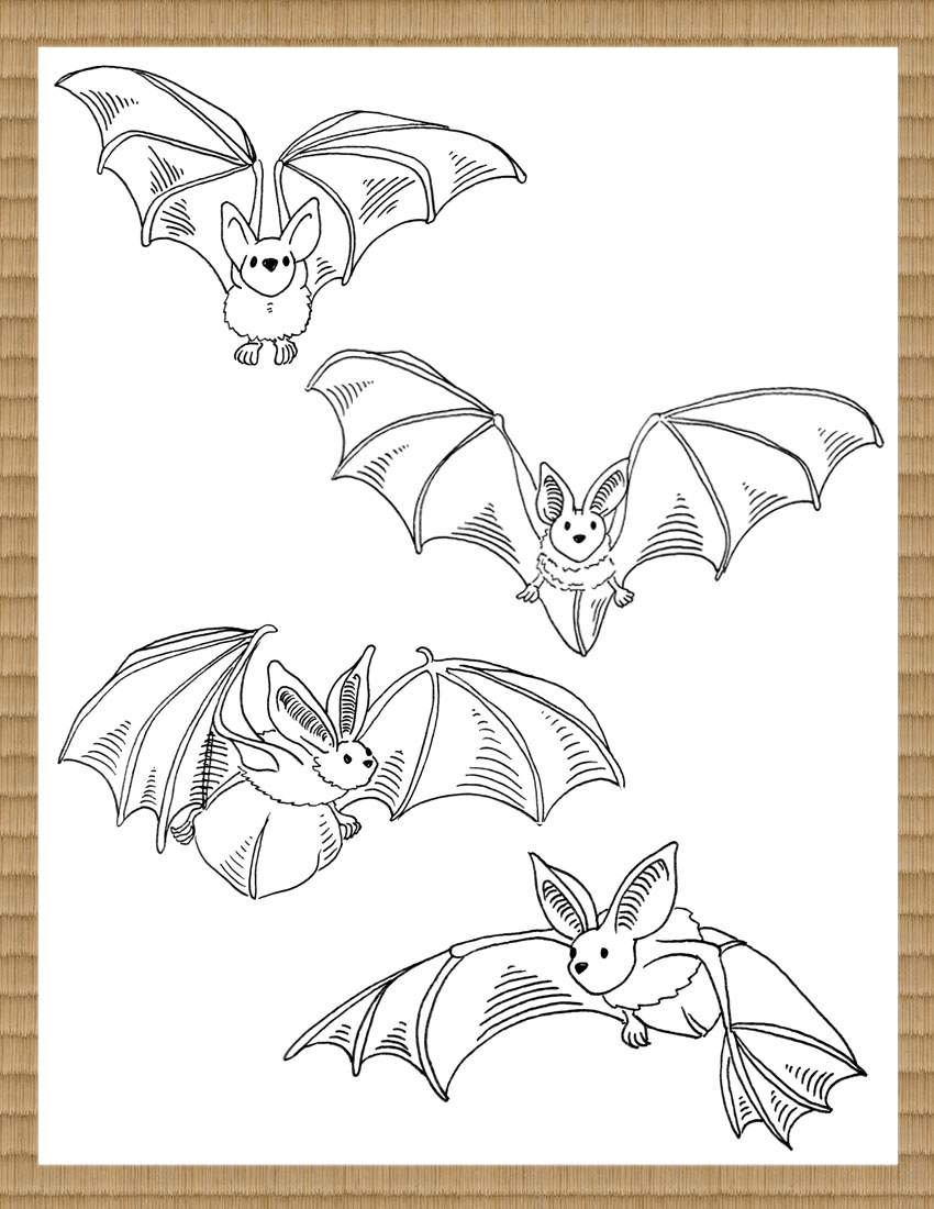 batsGallery.1.jpg