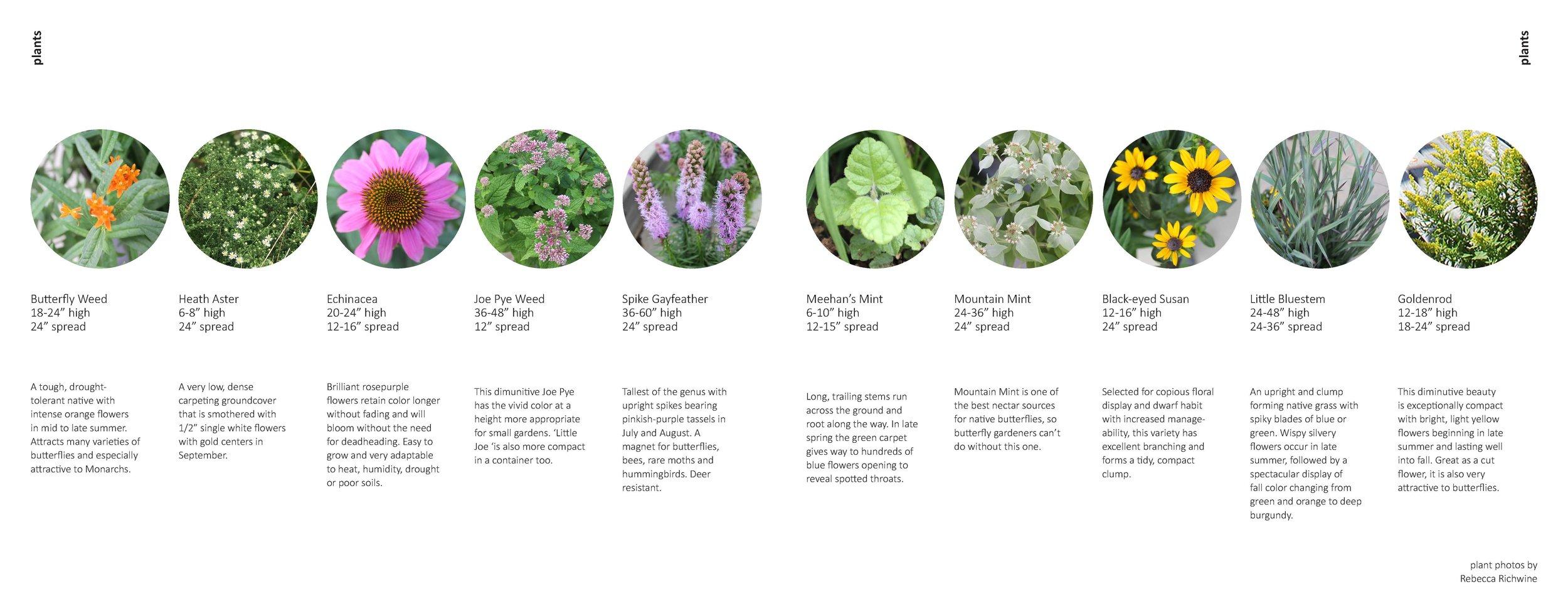 Plants in Pollinator Pots