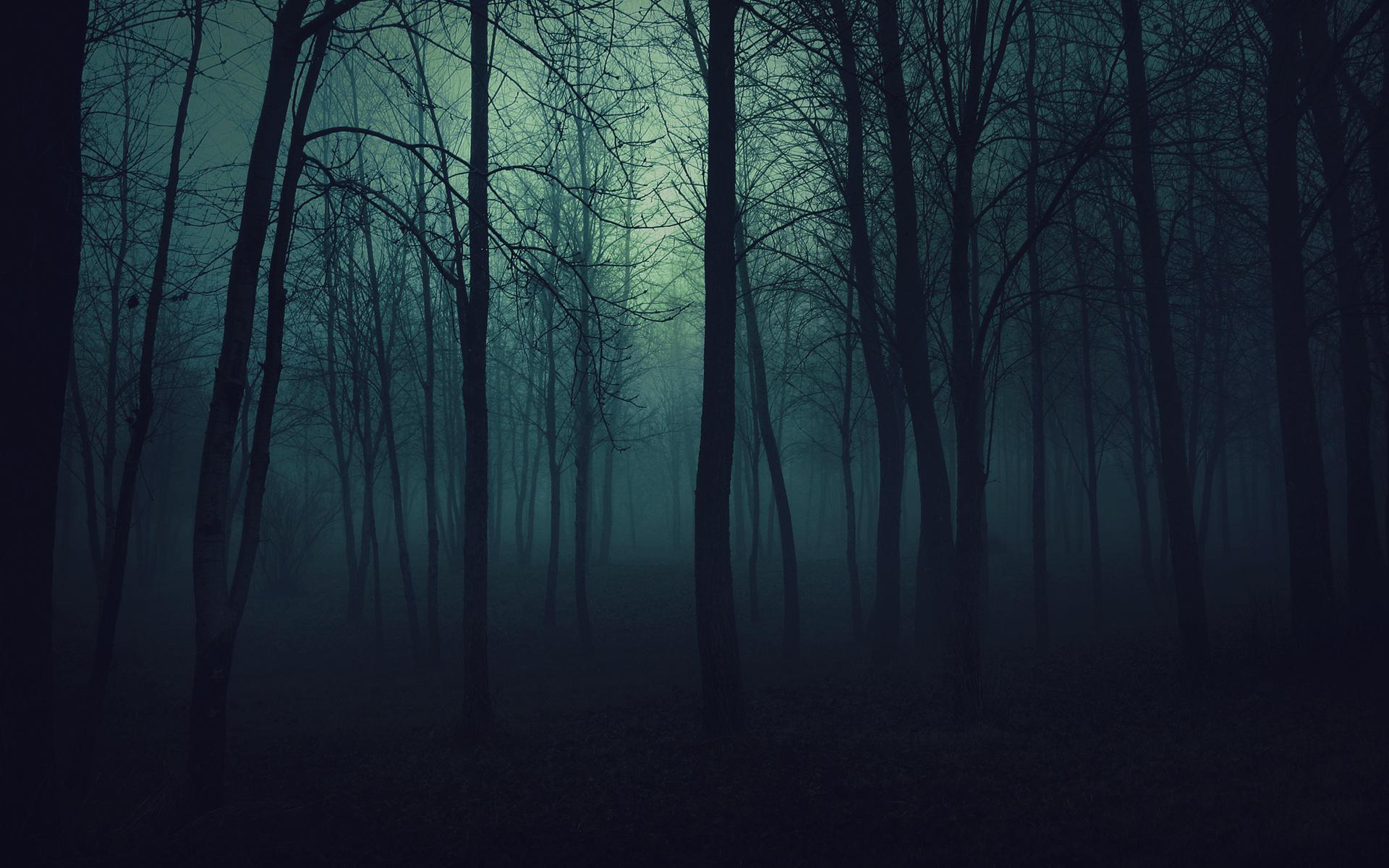 Haunted Tree Images, Stock Photos & Vectors   Shutterstock