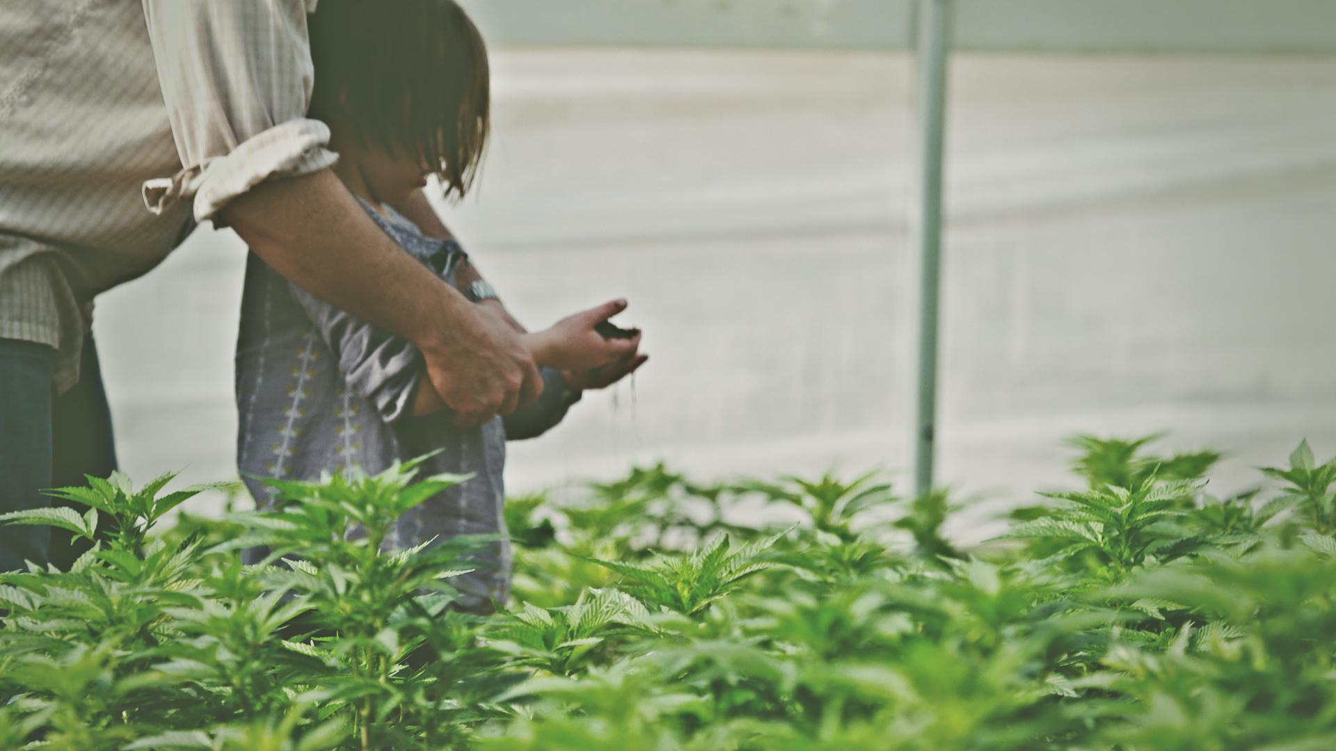 Marijuana Refugee - Webmd: Special Report Documentary, 2014