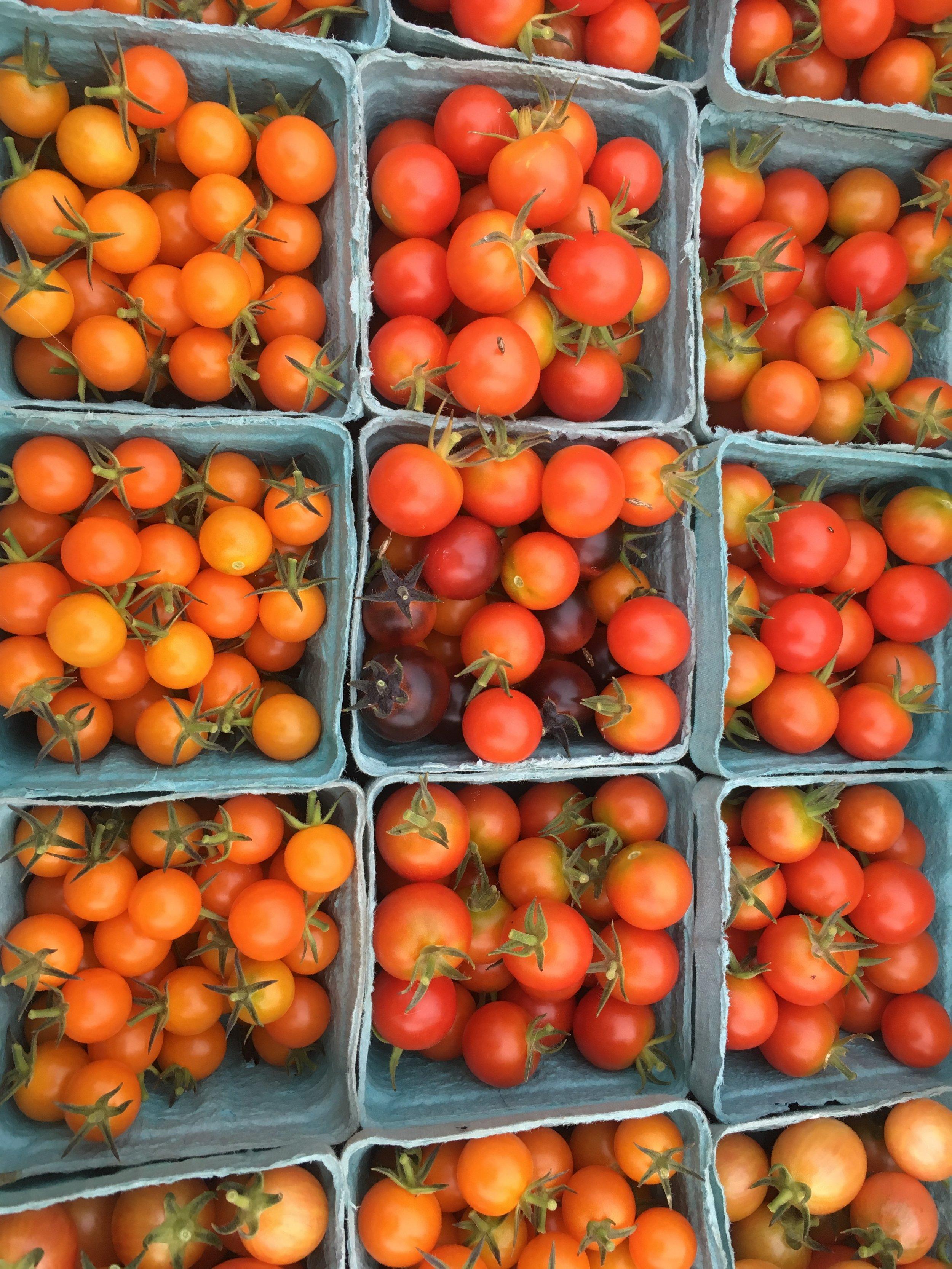 Cherry tomato harvest!