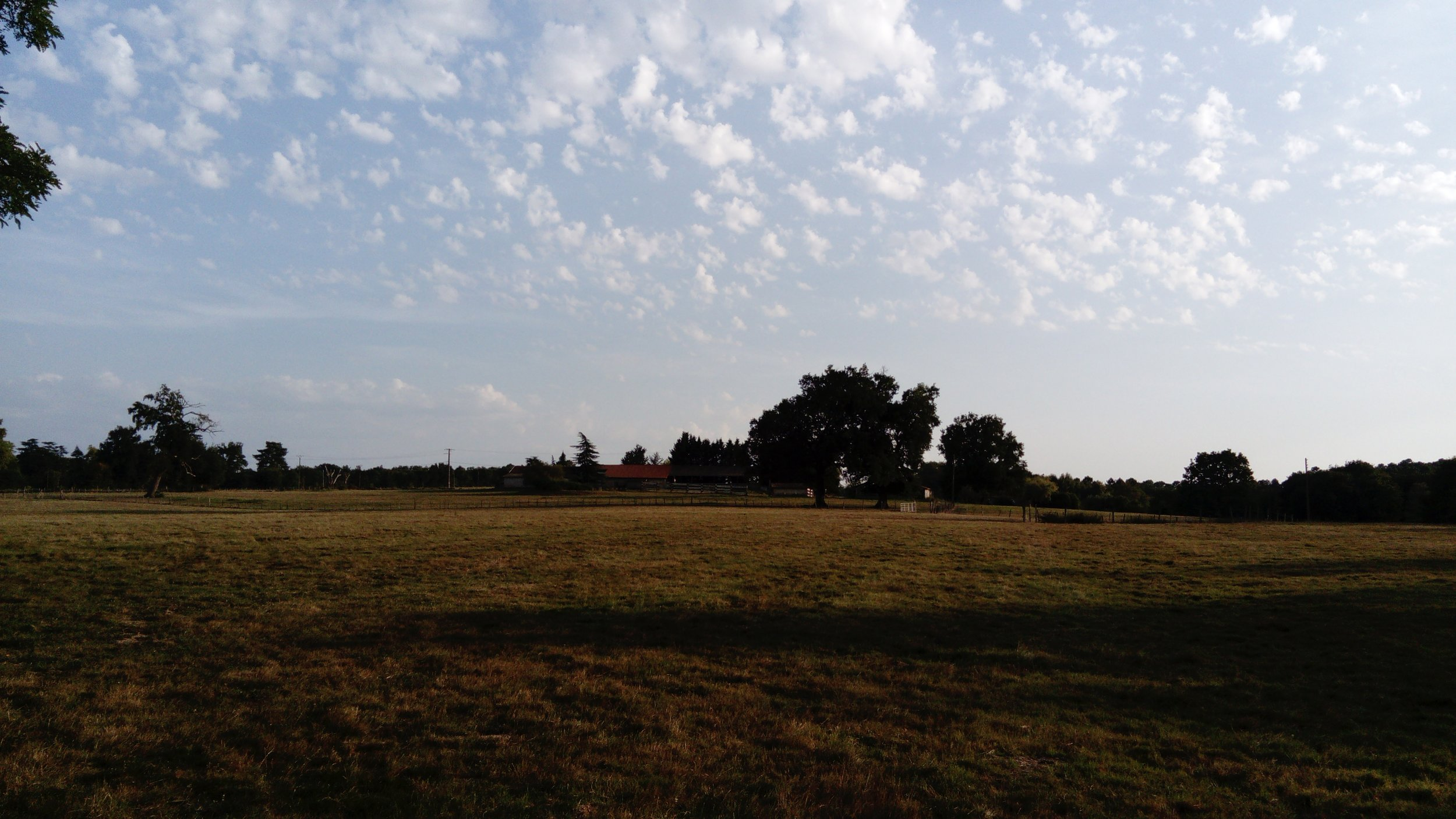Pasture land, some of which is now an orchard
