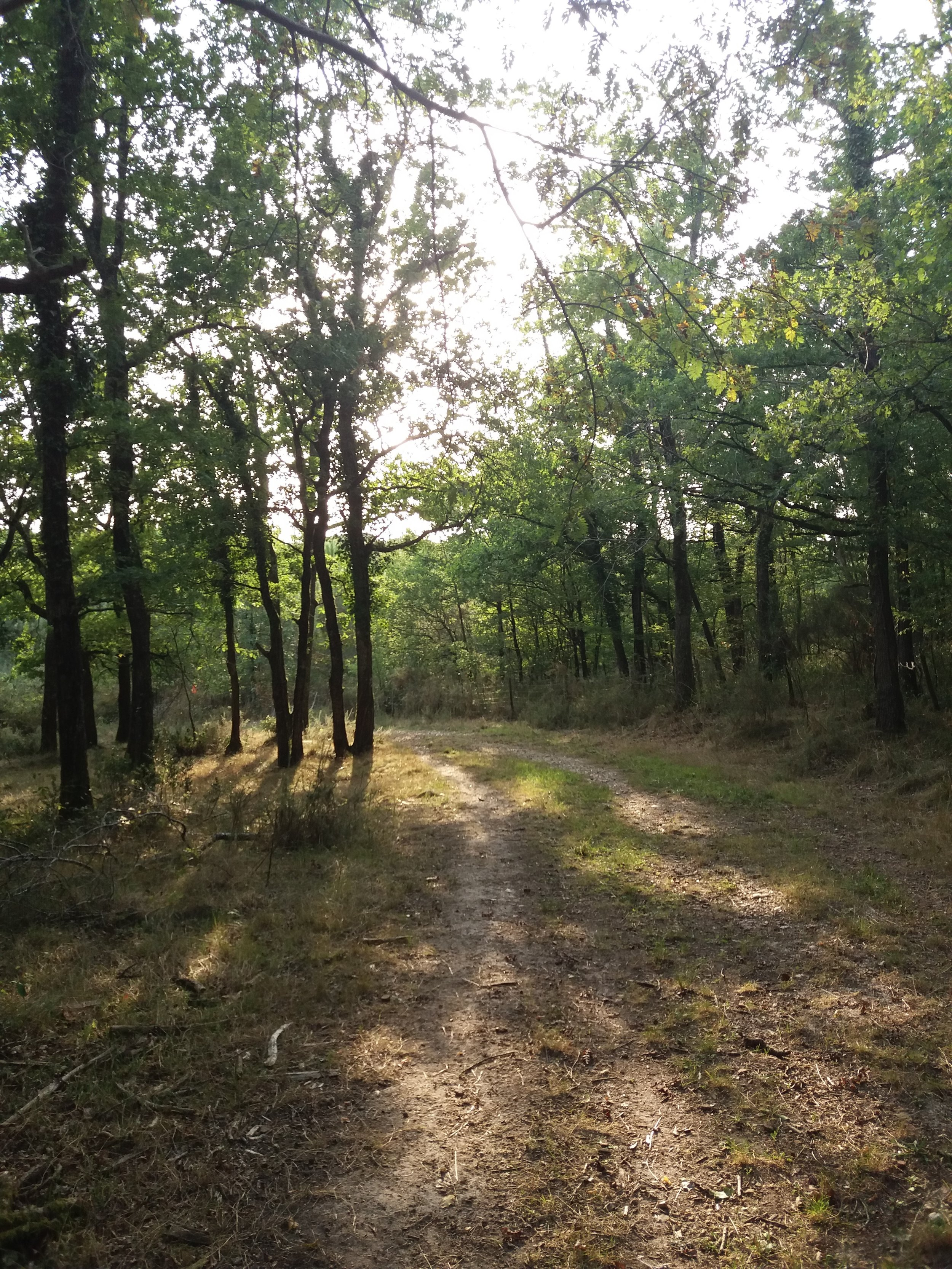 Maintained paths make exploring the woods easy