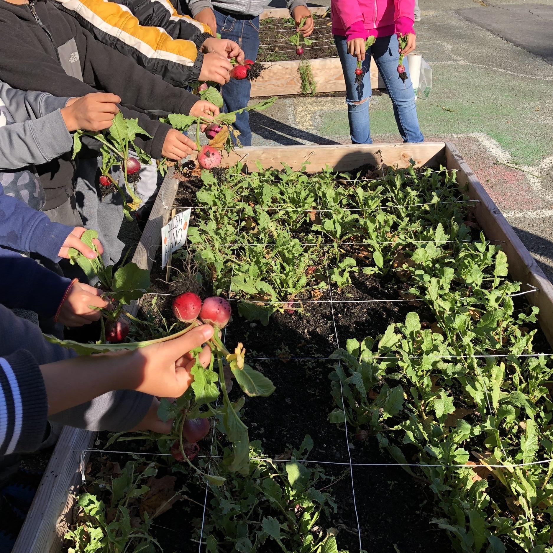 Harvest at Washington.jpg