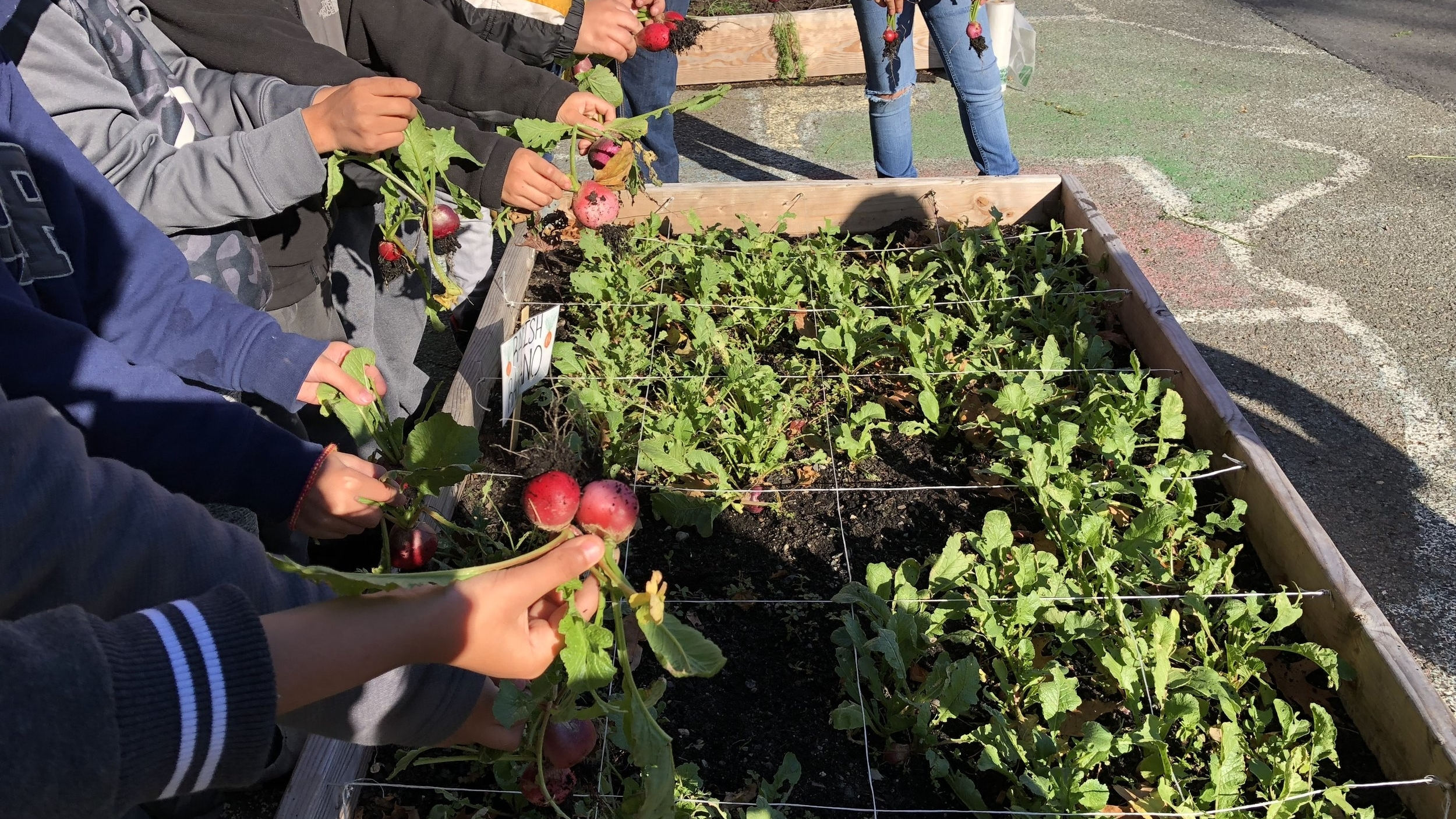 We envision a place and culture where residents of Lynn have access to the resources needed to make healthy decisions around their food choices.