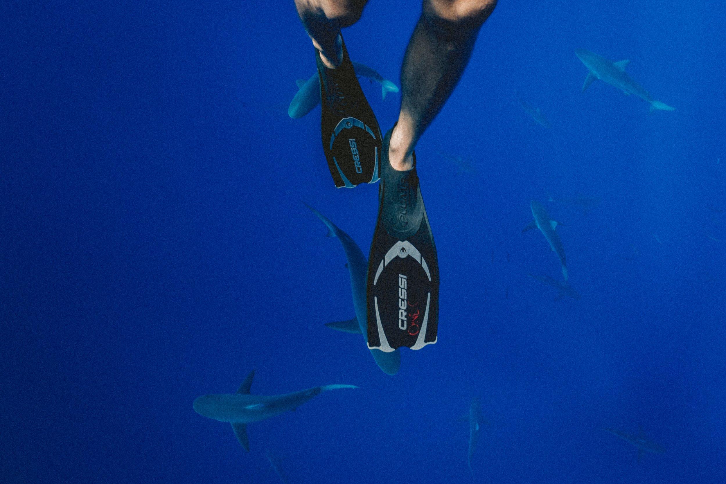 Plongée, kayak ou paddle - dans les Calanques
