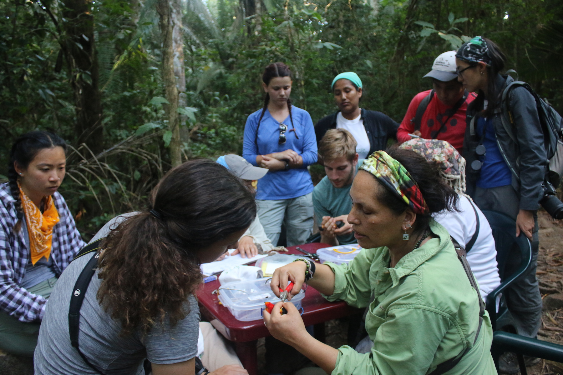 Ursula Valdez     ,    co-founder of CECCOT   ,    leads a group in banding birds within our conservation area.