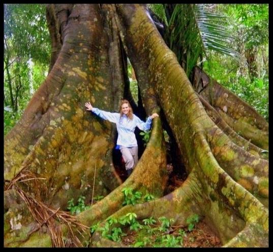 amazon-tree.jpg