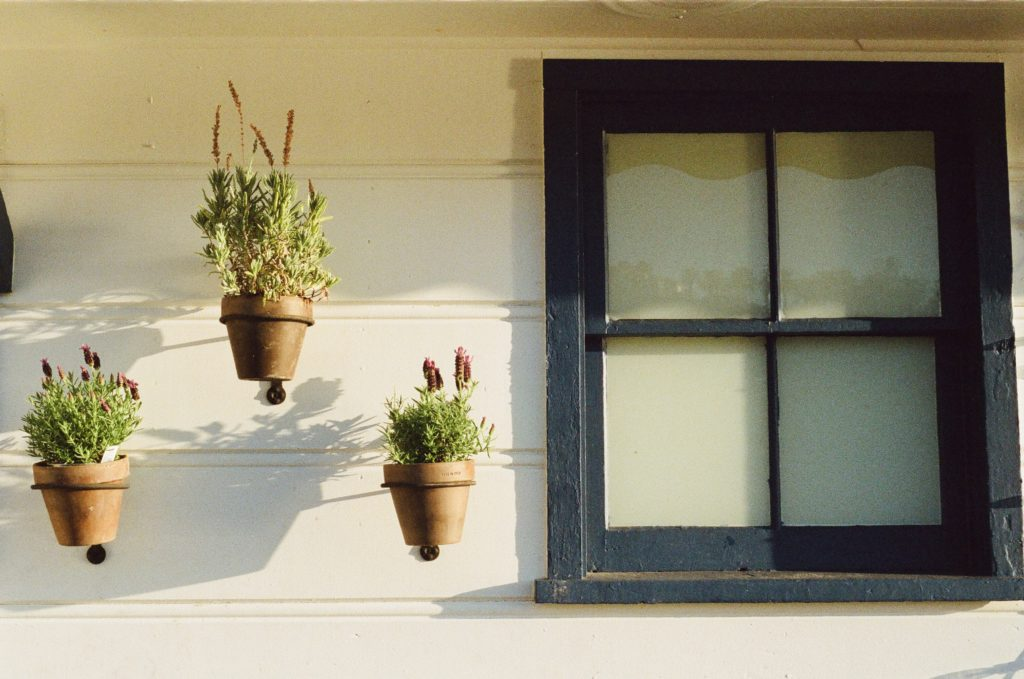 window with potted flowers.jpg