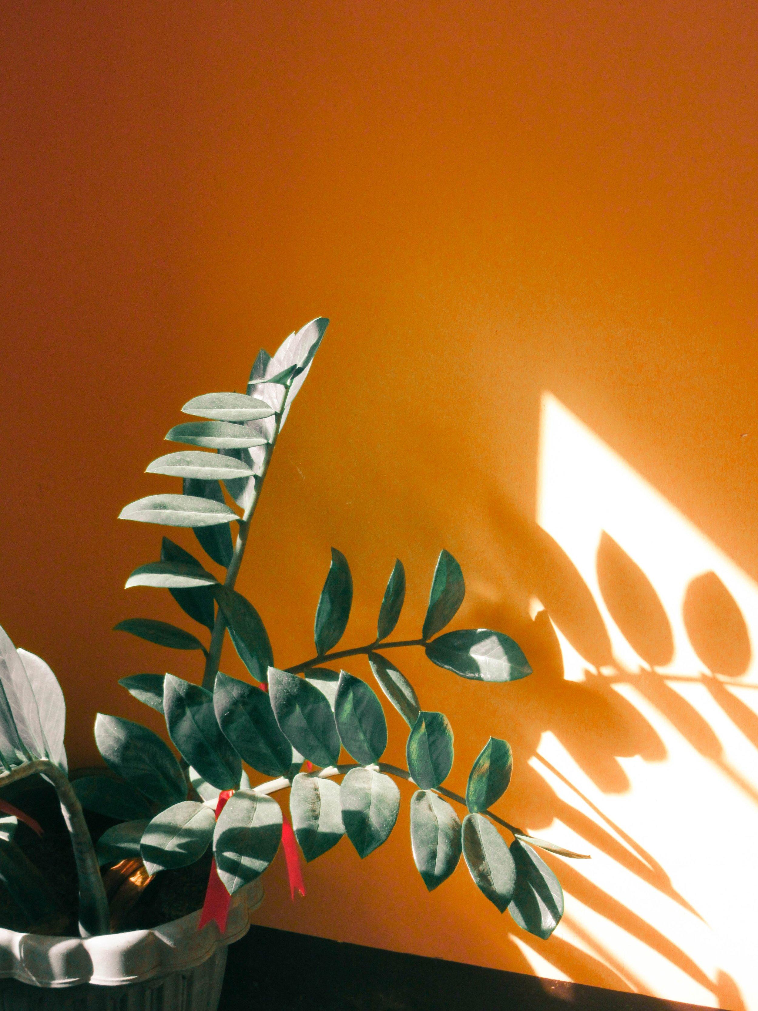 light-orange-plant-824572.jpg