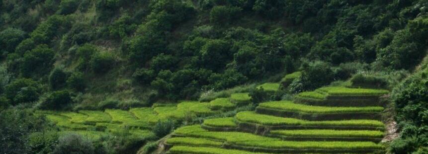 PURE LAND FARMS, GELEPHU