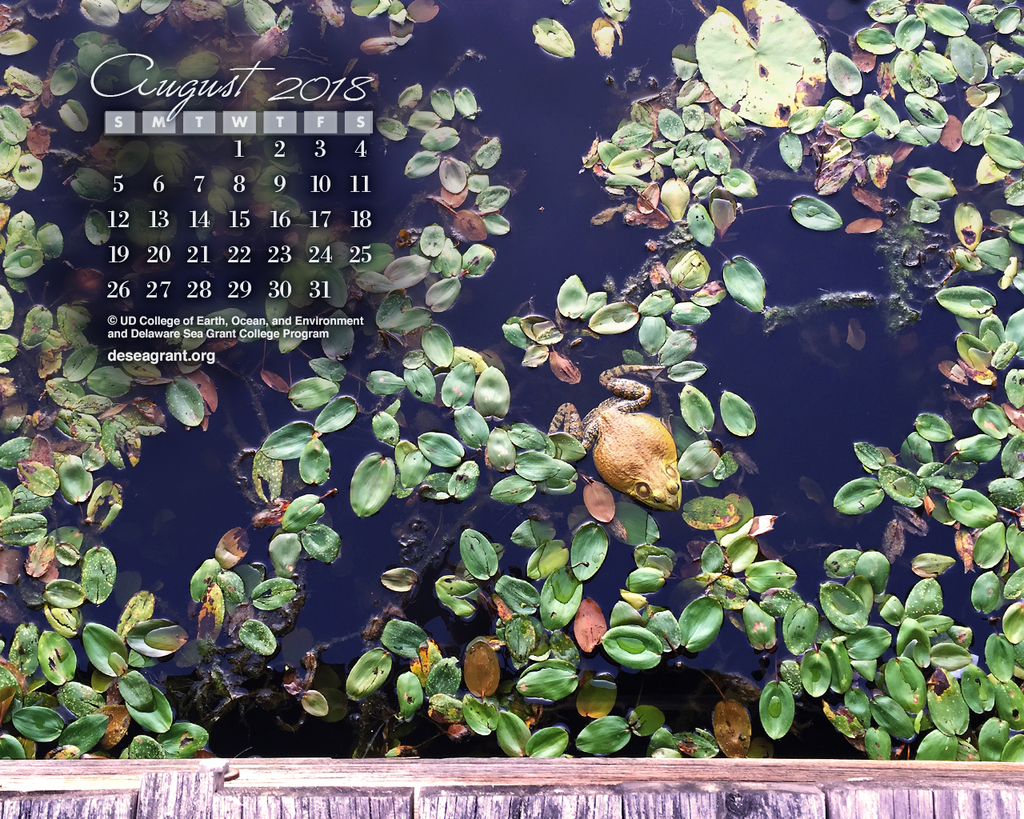 Calendar wallpaper of frog in lillies.