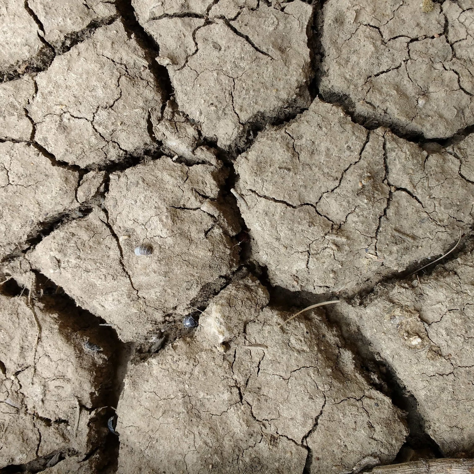 Frequent Droughts - More irregular precipitation and hotter temperatures as a result of climate change will combine to cause more frequent and more intense summertime droughts. These droughts could threaten Delaware's agricultural economy, which relies heavily on irrigation.