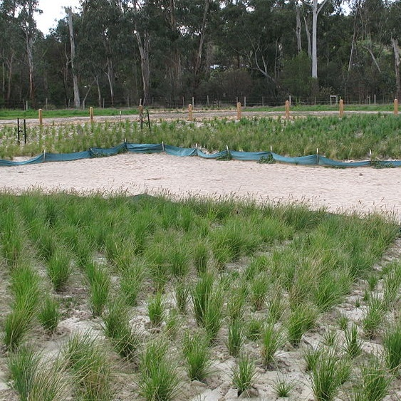Protect Natural Ecosystems - Enhance, restore, or protect natural areas that can provide resilience against natural disasters.Example: Restore local wetlands that buffer coastal properties from storm flooding.