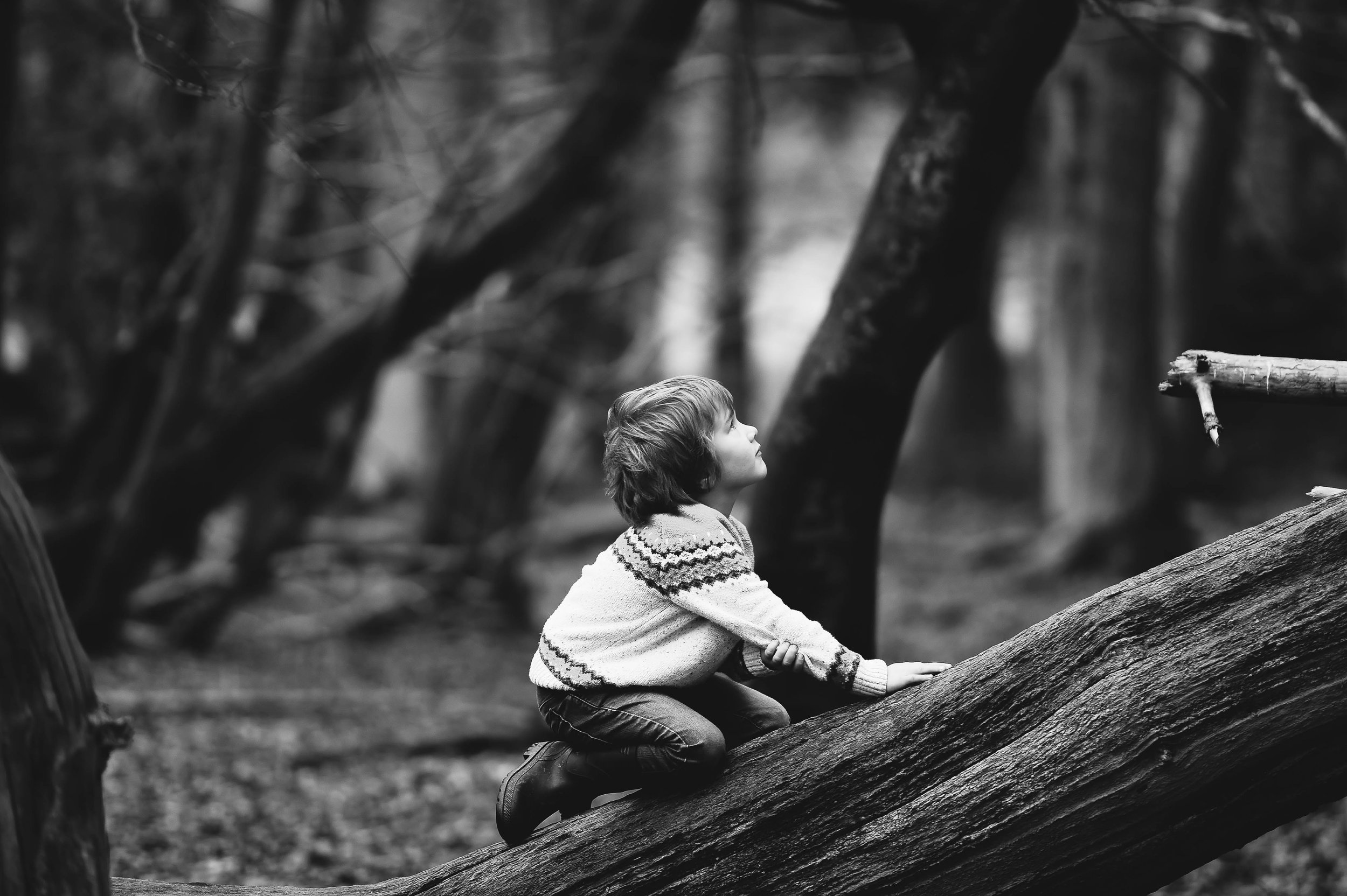 Boy_anglo_tree.jpg