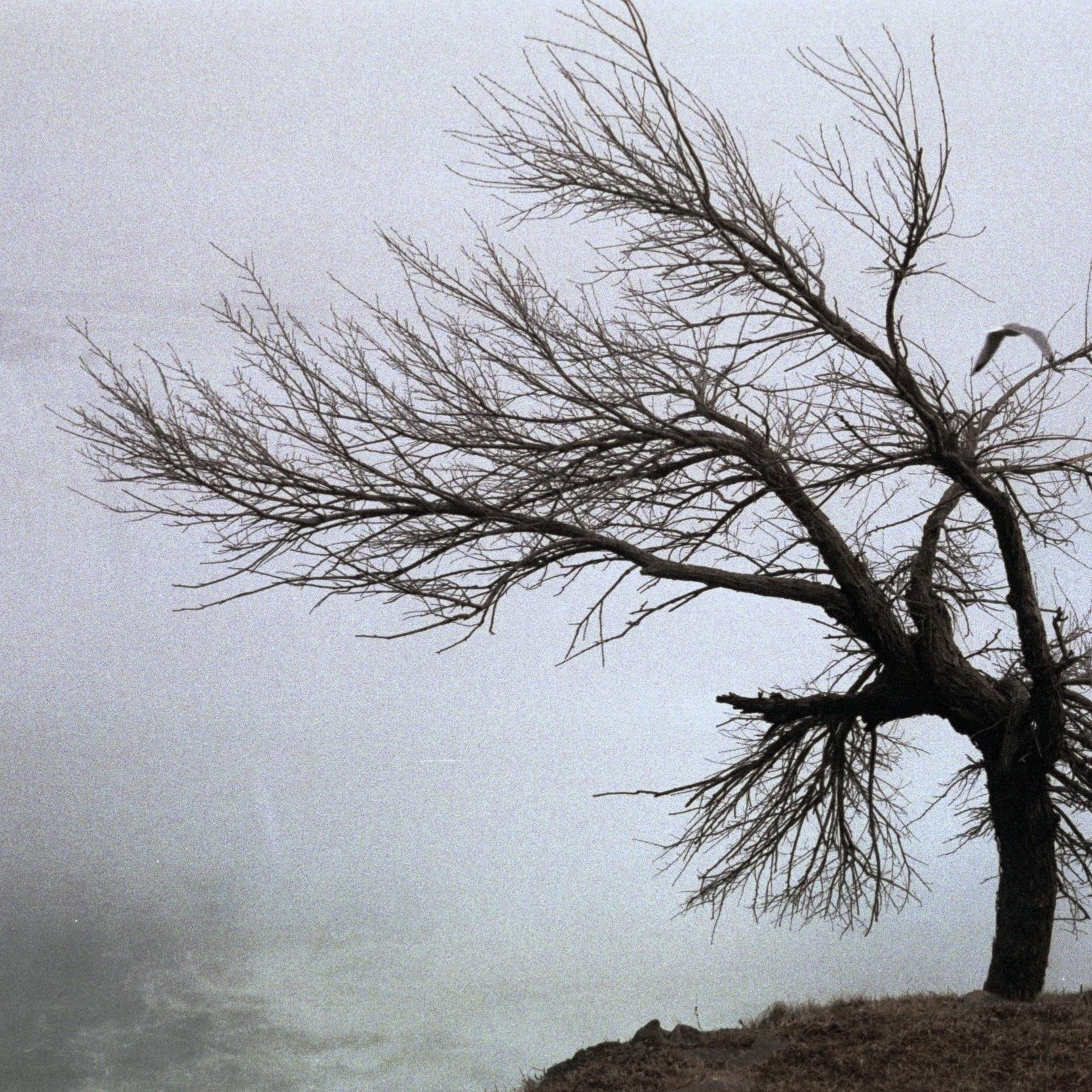 Hiradfar_Maryam_Tree+By+the+Waterfalljpg.jpg