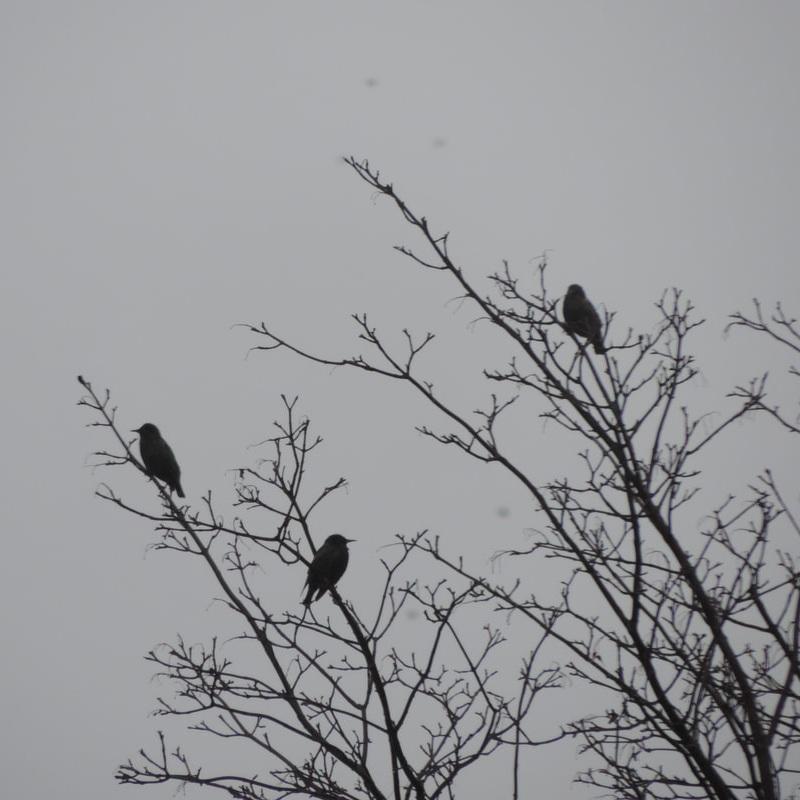 lydia+wang.three+birds+on+tree.jpg