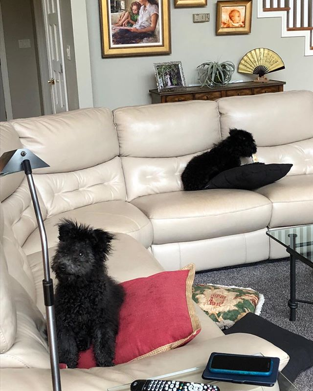 Duck looking at camera and O eating a bone. They are comfortable on the couch. Such funny girls!❤️