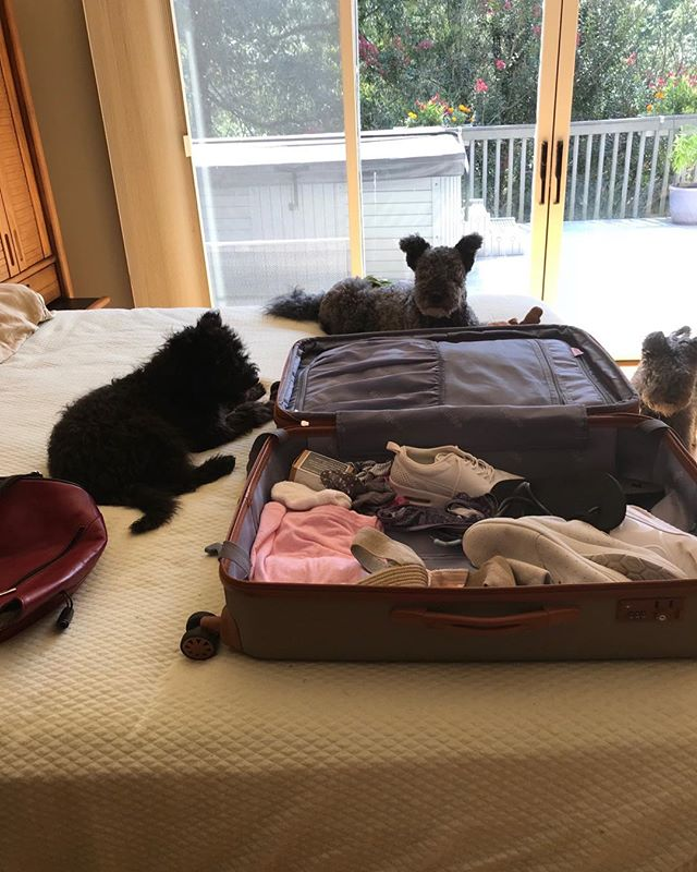 Headed to World show Today so my packing crew is helping!