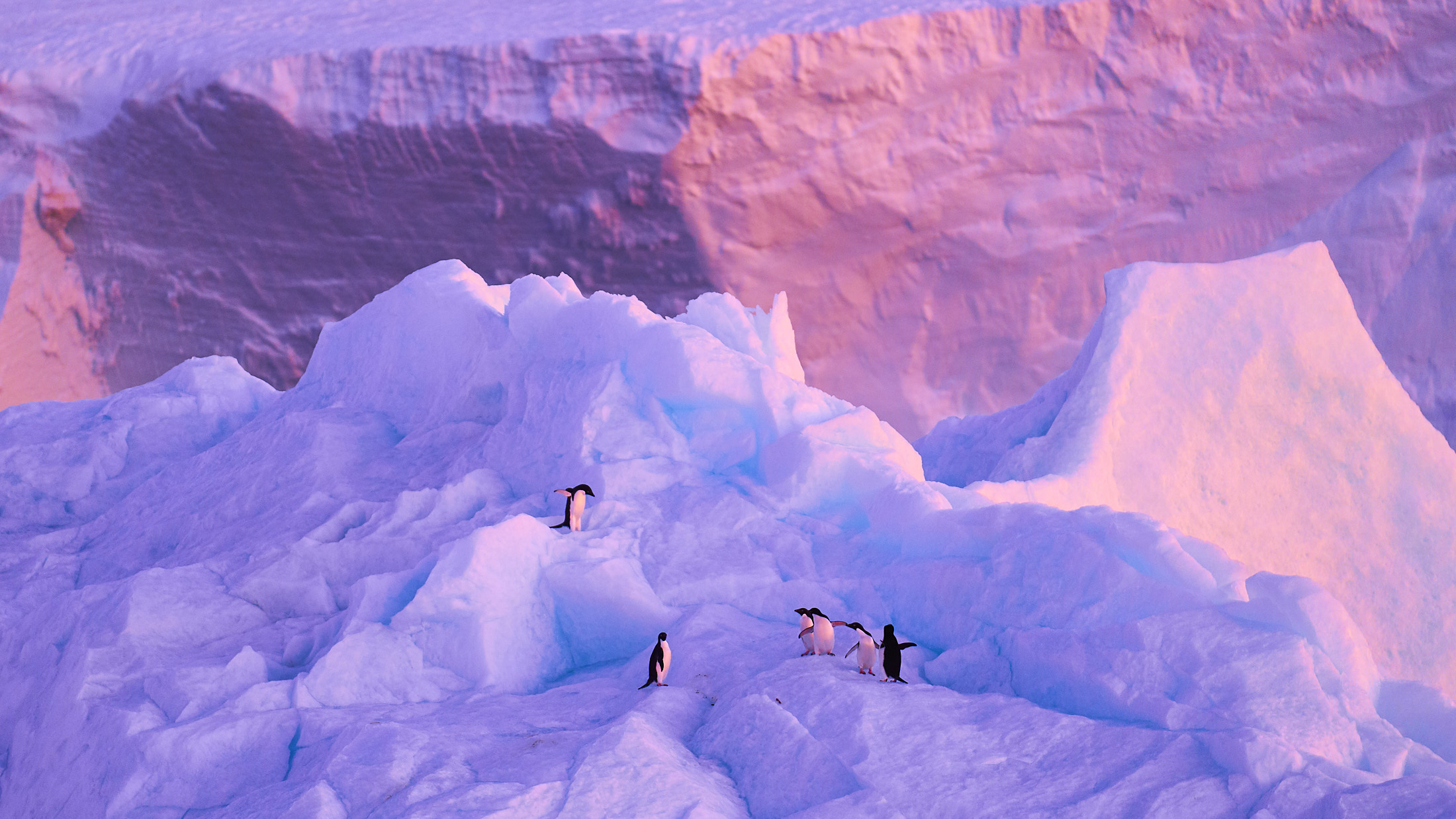 Linblad / National Geographic Expeditions   Journey into Antarctica   VIEW PROJECT