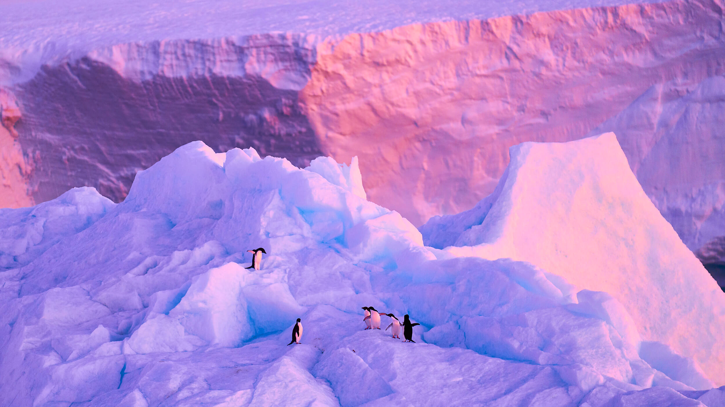 costudio-antarctica-2018-02057.jpg