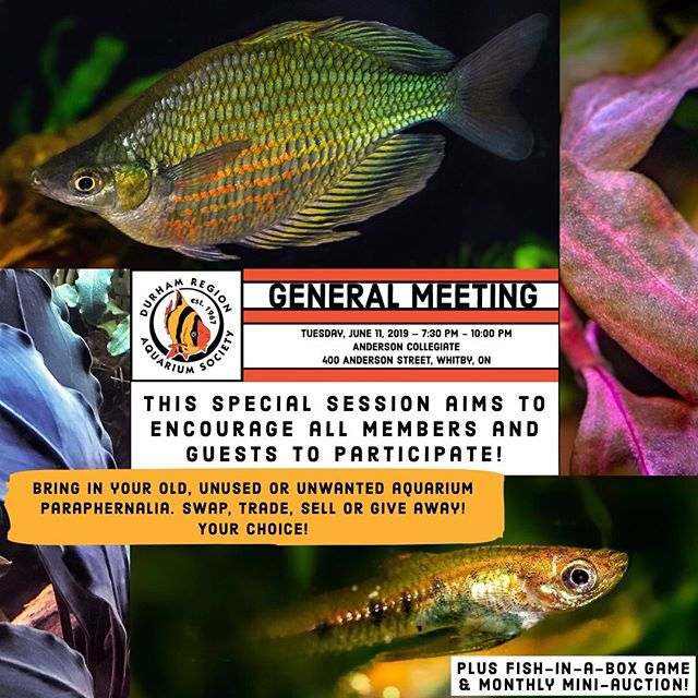 For our last meeting before the summer break, this special session aims to encourage all members and guests to participate, bring questions, & share both information and aquarium items! Swap, trade, sell or give away! Your choice! Plus fish-in-a-box game!  Note: The monthly mini-auction will be held at 8 PM. Don't forget that there is a 10 item (bag) limit for all general meeting auctions; donations to DRAS will be accepted. Any late auction items may be sold or shared in the swap, but remember any un-swapped items must be taken back home!  Location: Anderson Collegiate 400 Anderson St., Whitby, ON  Date & Time: Tuesday, June 11th, 2019 7:30 PM - 10:00 PM  #dras #durhamregionaquariumsociety #meetings #swaps #auctions #freshwater #saltwater #aquaticplants #aquariums #aquariumhobby #aquariumclub #aquatic #community #clubs #durham #gta #durhamregion #ontario #canada #spring #endofseason