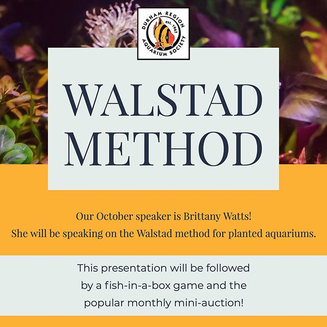 Our October speaker is Brittany Watts and she will be speaking on the Walstad method for planted aquariums.  This presentation will be followed by a fish-in-a-box game and the popular monthly mini-auction!  Location: Toronto Zoo Atrium @ 361a Finch Ave.  Date: Tuesday, October 8th, 2019  Time: 7:00 PM
