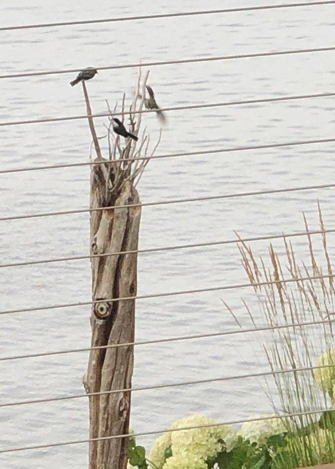 Lake side.jpg