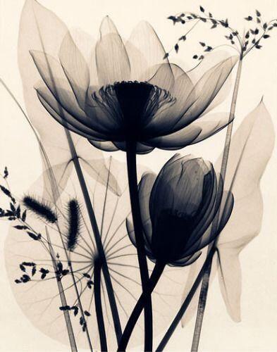 Photo credit: Lotus & Grasses by Judith McMillan