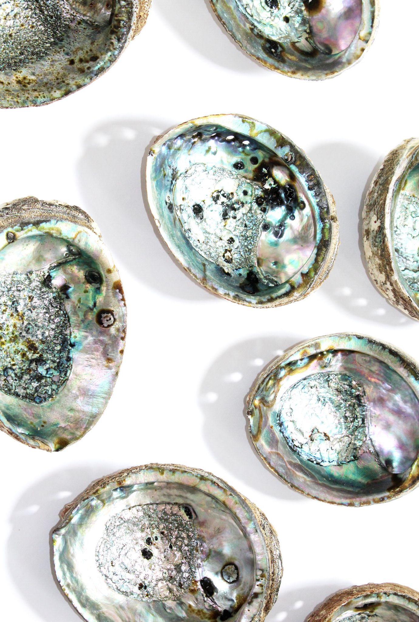 Abalone Shell Wallpaper
