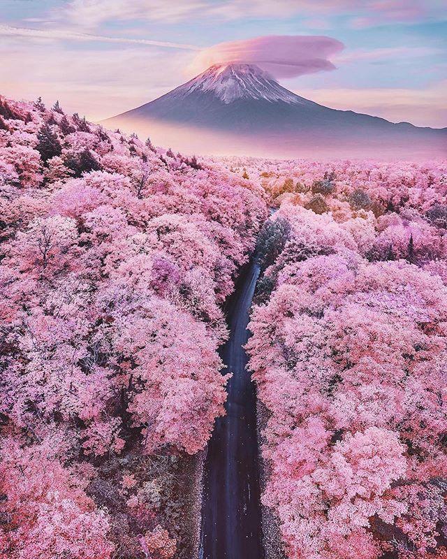 Amazing what Mother Nature produces 🌺 - cherry blossom season Japan. Choose YOU! Choose Certified Organic. #Organic #Vegan #PlantBased #AllNatural #CertifiedOrganic #SustainableSkinCare #family #nature #kunzia #chooseyou #sabaorganics #botanicals 📸 Via @earth