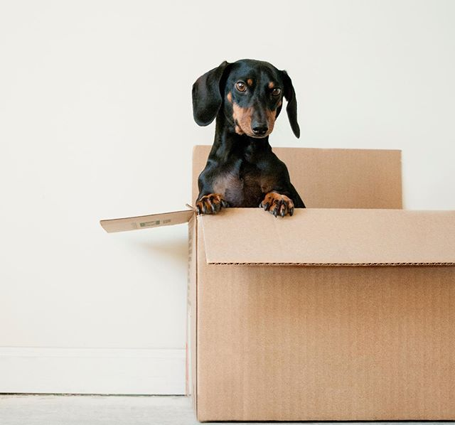 Moving can be 'ruff'... unless it's with Muval, the Uber for removalists. 🚛 #muval