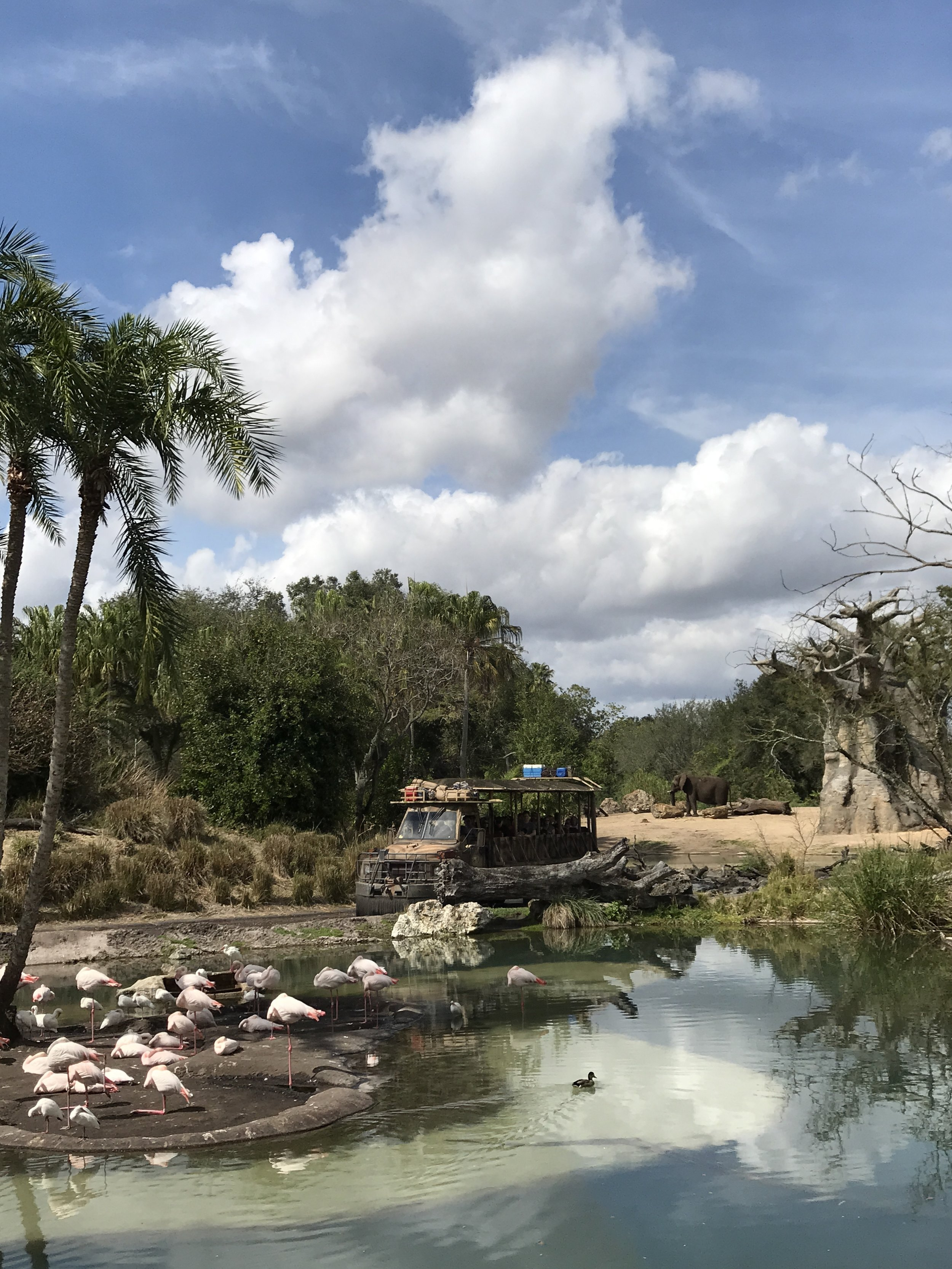 A view from the Animal Kingdom safari