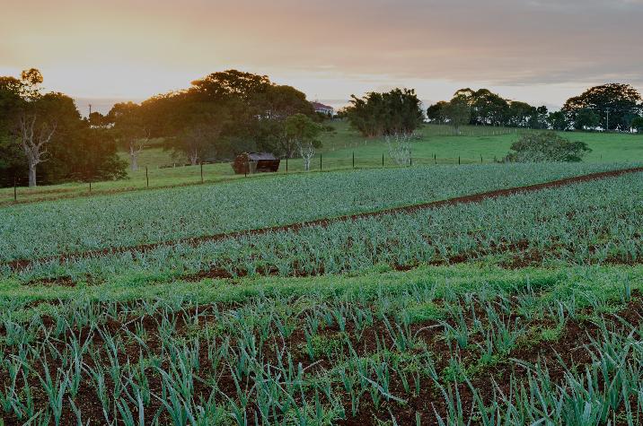 INTENSIFICATION - OF FARMINGIMAGES