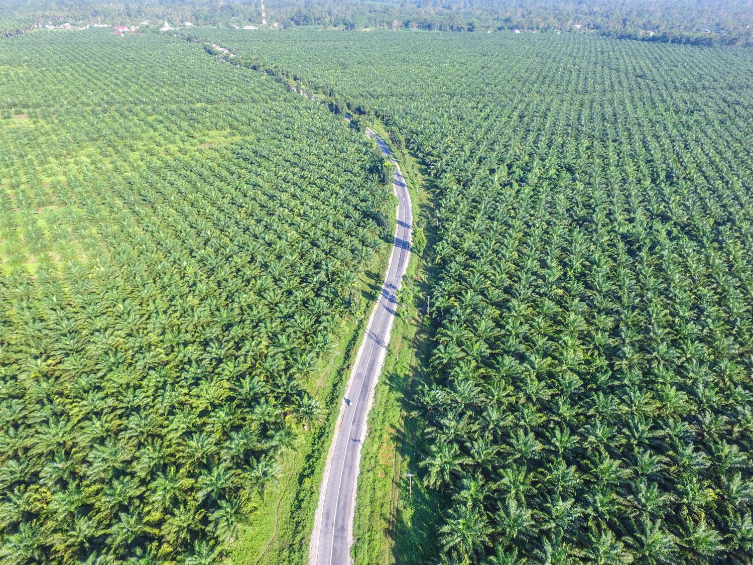 palm-oil-plantations.jpg